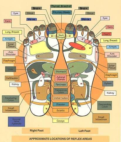 mapa del pie de reflexologia