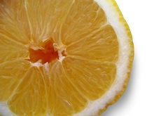 rodaja-limon