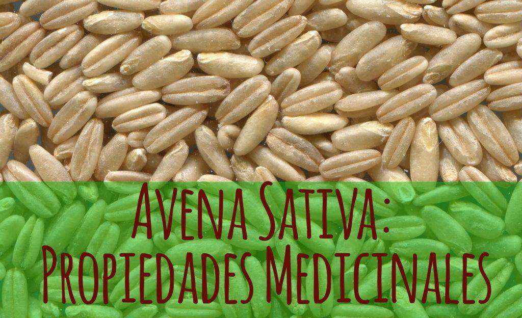 Avena (Avena Sativa). Propiedades y usos medicinales.