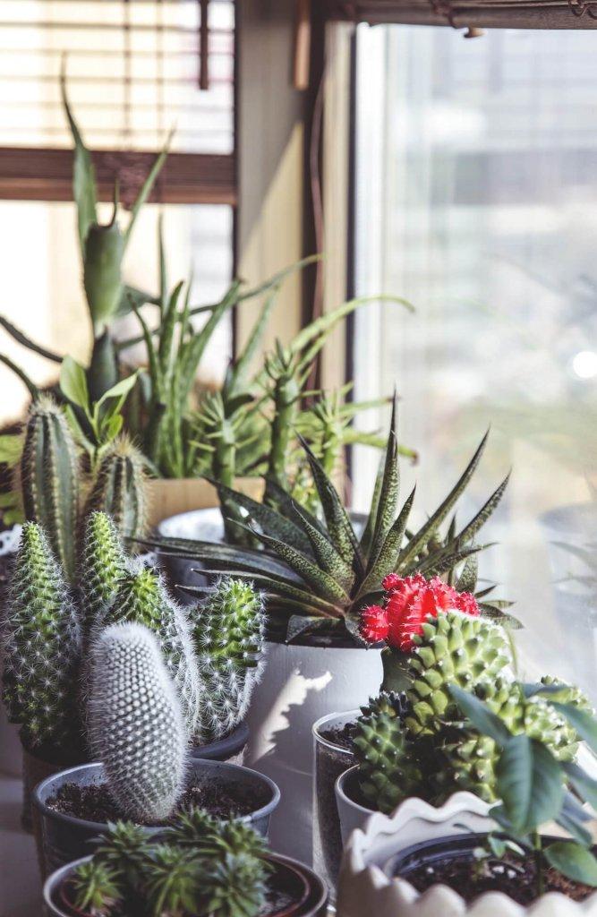 Plantas que purifican el aire de nuestras casas trucos - Plantas de interior que purifican el aire ...