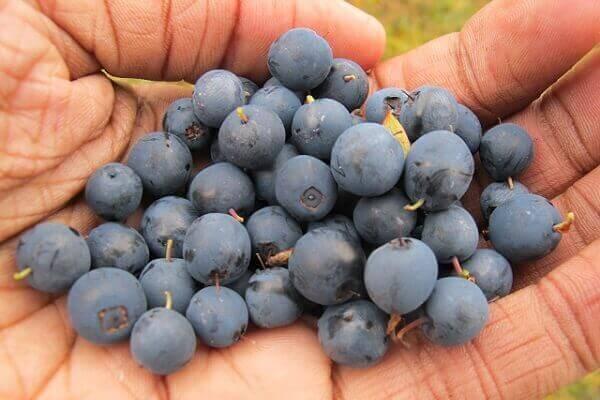 que alimentos provocan el acido urico remolacha es buena para el acido urico alimentos que ayudan a reducir el acido urico