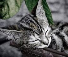 Gatito dormido