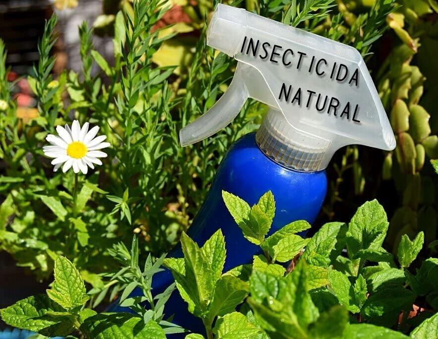spray insecticida a base de ajo entre plantas