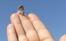 Mano y mariposa.