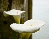 Flores preciosas.