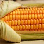 Tarta de maíz.