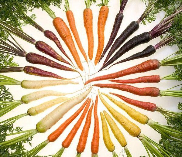 zanahorias de muchas variedades