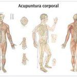¿Qué son y cómo funcionan los meridianos de acupuntura?