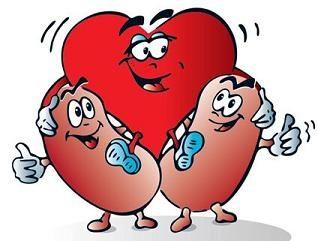 unos riñones sanos para una buena salud general