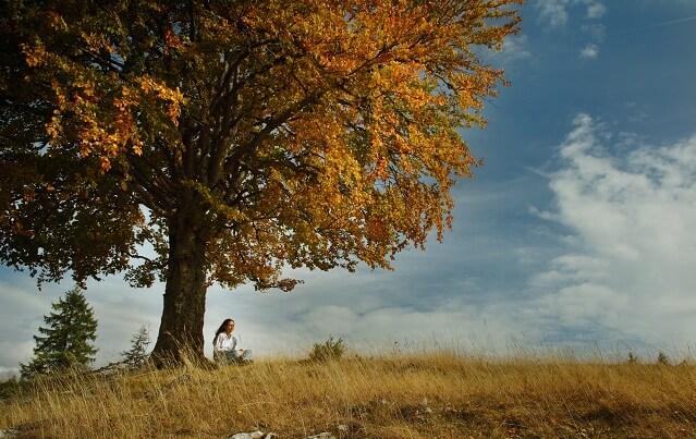 una chica sentada al lado de un arbol enorme en otono