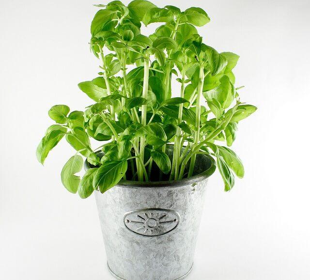 Plantas medicinales que alcalinizan el organismo