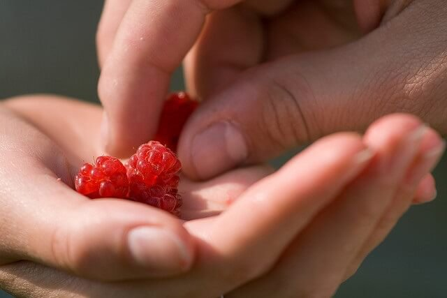 frutos rojos en una mano mientras otra mano coge una frutilla