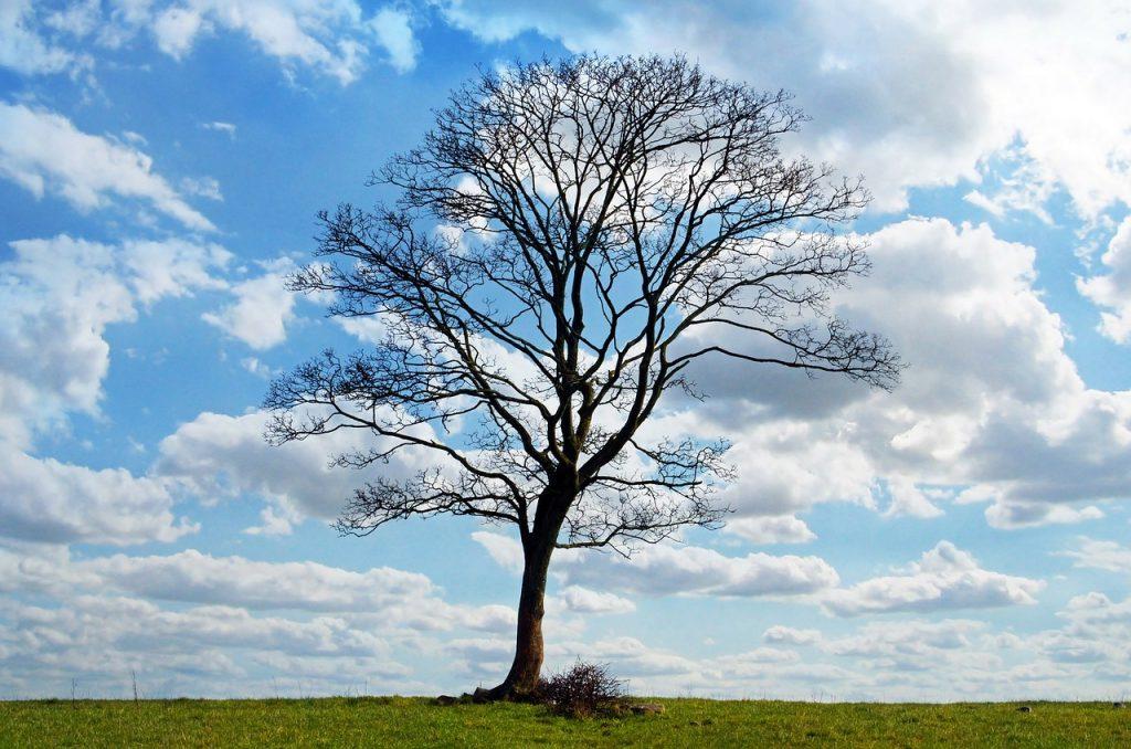 Remedios para la Astenia Primaveral