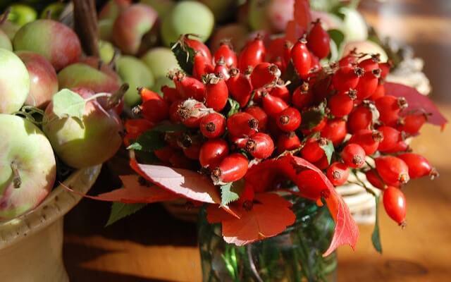 frutos de rosa moqueta en una jarra con agua